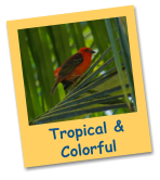 Tropical &    Colorful