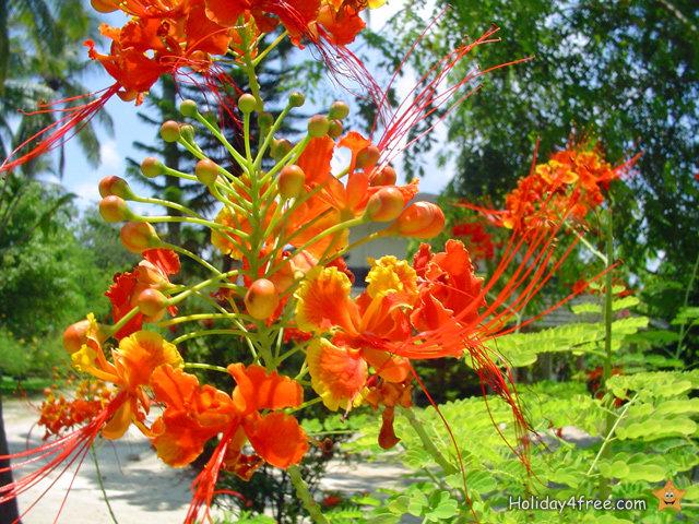 exotische blumen 006 tropische pflanzen und paradiesische gew chse in allen farben. Black Bedroom Furniture Sets. Home Design Ideas