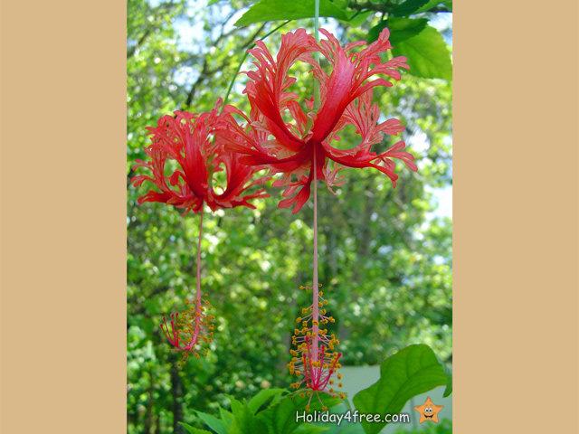 exotische blumen 018 tropische pflanzen und paradiesische gew chse in allen farben. Black Bedroom Furniture Sets. Home Design Ideas