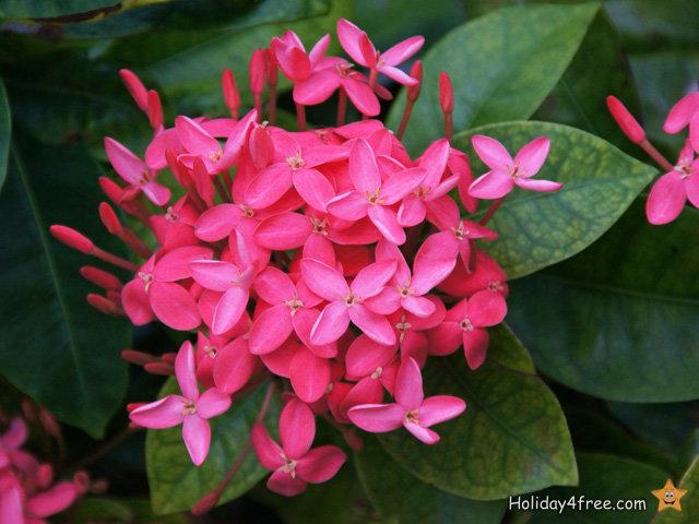 exotische blumen 048 tropische pflanzen und paradiesische gew chse in allen farben. Black Bedroom Furniture Sets. Home Design Ideas